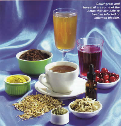 Herbal Remedies for Bladder Infections